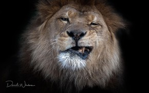 Picture portrait, Leo, grin