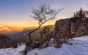 Picture winter, the sky, snow, mountains, branches, fog, open, tree, rocks, height, the bushes