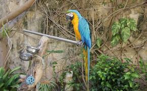 Picture tree, bird, Parrot, Ara