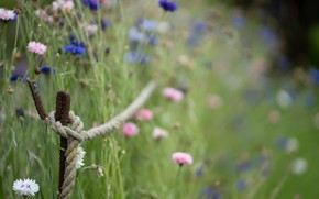 Picture grass, flowers, rope