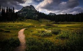 Picture clouds, trees, landscape, mountains, nature, track, USA, path, reserve, National Park, Mount Rainier, Mount Rainier