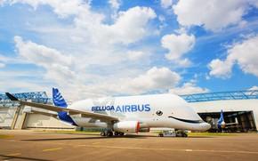 Picture the plane, the plane, Cargo, Airbus, Beluga, A300, Airbus Beluga, Super Transporter, Beluga XL, cargo …