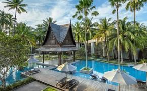 Picture palm trees, pool, Thailand, Phuket, resort, Twinpalms resort