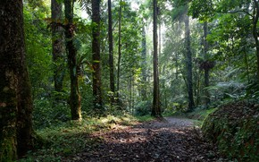 Picture forest, trees, nature, morning, Indonesia, path, the island of Java