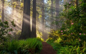Picture forest, rays, light, trees, landscape, nature, track, grass, fern, path, the bushes, Doug Shearer