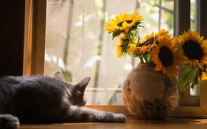 Picture cat, cat, light, sunflowers, flowers, pose, bouquet, window, sleeping, lies, vase, sill, atlah