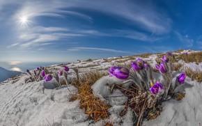 Picture the sun, rays, snow, landscape, nature, spring, primroses, Crimea