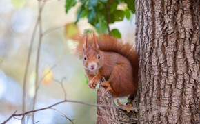 Picture look, nature, pose, tree, protein, bark, sitting, rodent