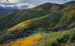 Picture greens, summer, clouds, flowers, mountains, stones, hills, vegetation, the slopes, colored, view, spring, slope, spot, …