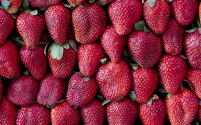 Picture berries, strawberry, red, fresh, ripe, sweet, strawberry, berries