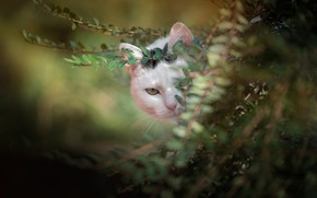 Picture greens, cat, look, branches, muzzle, bokeh, cat