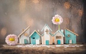 Picture flowers, background, houses