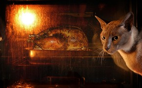Picture cat, look, face, the dark background, food, chicken, oven, waiting, lunch, fried, oven, grill, cooking, …