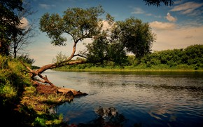 Picture river, tree, dawn, morning