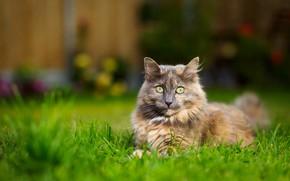 Picture cat, grass, cat