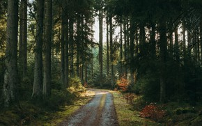 Picture road, forest, trees, nature, pine