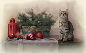 Picture cat, cat, branches, table, animal, holiday, toys, new year, spruce, lantern, basket, needles, Kovaleva Svetlana, …