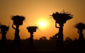 Picture sunset, women, harvest