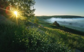Picture summer, the sun, trees, fog, morning, meadow