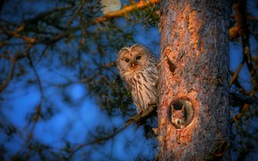 Picture forest, night, owl, squirrel