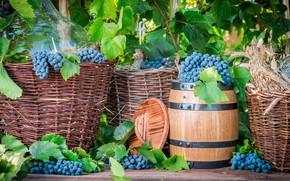 Wallpaper Grapes, stock, The harvest