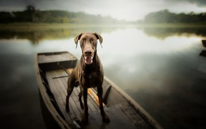 Picture each, boat, dog