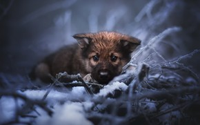 Picture cold, nature, dog, puppy