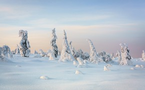 Picture winter, frost, forest, snow, trees, nature, ate, the snow, light background, winter, Christmas trees, snowy