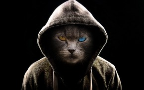 Picture dark, fantasy, cat, serious, cats, digital art, brown eye, hood, miscellaneous, muzzle, fiction, blue eye, …