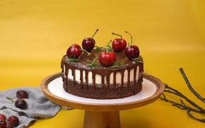 Picture branches, cherry, berries, cherry, cake, yellow background, dessert, cherry, stand, sweet, chocolate cream