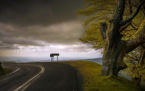 Picture road, tree, turn