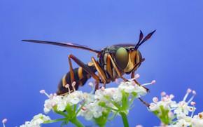 Picture the sky, macro, nature, fly, flowers, Иван Радьков, большеголовка