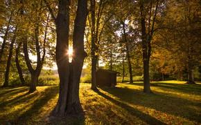 Picture autumn, the sun, trees, Park