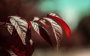 Picture leaves, macro, tree, branch, bokeh