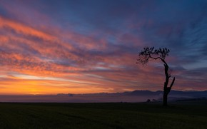 Picture field, the sky, clouds, sunset, mountains, tree, silhouette, space, twilight, alone