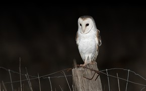 Picture look, night, darkness, the dark background, owl, bird, the fence, wire, post, black background, the …