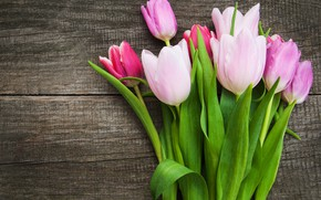 Picture tulips, pink, wood, pink, flowers, tulips