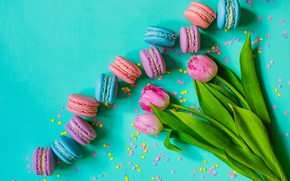 Picture tulips, pink, pink, flowers, tulips, macaron, macaroon
