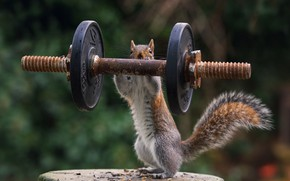 Picture nature, sport, stump, protein, athlete, pancakes, Jock, rod, bokeh, strongman, the severity