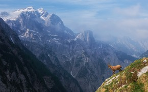Picture the sky, mountain goat, mountains