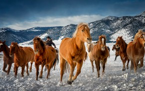 Picture winter, mountains, horses, horse, Colorado, the herd
