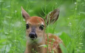 Picture animals, nature, deer
