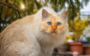 Picture autumn, cat, cat, look, face, light, branches, pose, garden, red, sitting, needles, pots, bokeh