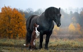 Picture autumn, horse, horse, dog, stand, Natalia Ponikarova