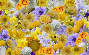 Picture flowers, different, spring