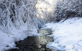 Picture winter, snow, trees, river