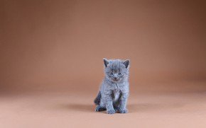 Picture background, minimalism, baby, kitty, sitting, frowning