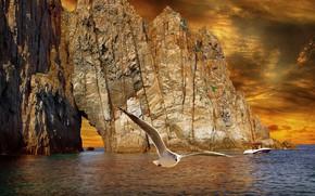 Picture sea, rendering, rocks, bird, shore, Seagull