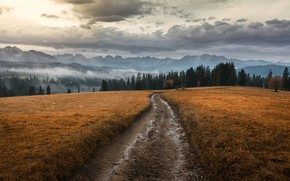 Picture road, forest, the sky, mountains, nature, the evening, Tomczak Michael