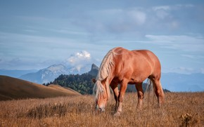 Picture field, the sky, mountains, nature, horse, horse, grazing